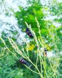 Зеленое растение и маленькие насекомые стоковое фото