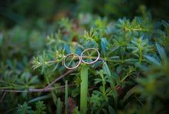 Зеленое растение и обручальные кольца Стоковая Фотография RF