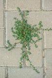 Зеленое растение на сером вымощая каменном взгляде сверху стоковая фотография rf