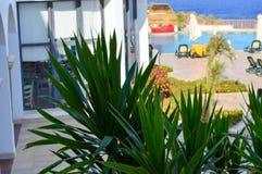 Зеленое растение с красивым длинным диезом выходит в теплый тропический курорт против фона зонтиков пляжа, бассейна и солнца lou Стоковое Фото
