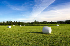 зеленое сено стоковое фото