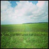 Зеленое травянистое поле в Georgia Стоковое Изображение RF