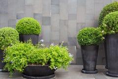 Зеленое украшение стоковое фото rf