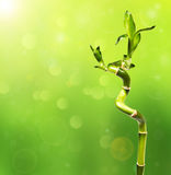 Зеленое bokeh бамбука на заднем плане Стоковое Фото