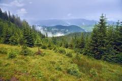 Зеленое forestn горы стоковые изображения rf