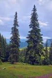 Зеленое forestn горы стоковое фото rf