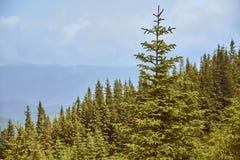 Зеленое forestn горы стоковая фотография rf
