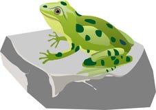 Зеленое frogg сидя на камне, иллюстрация вектора стоковые изображения