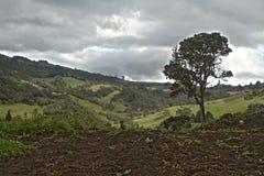 Зеленое Lanscape и небо стоковые изображения rf