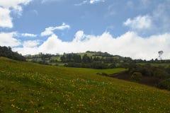 Зеленое Lanscape и небо стоковые фото