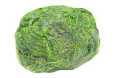 Зеленое spirogyra водоросли свежей воды имеет очень высокий кальций и бета-каротин, используемый для варить, оно популярно в севе стоковая фотография rf