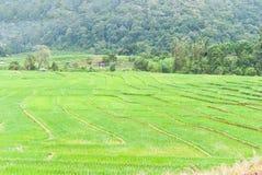 Зеленое Terraced поле риса. Стоковые Изображения RF