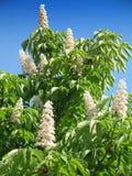 зеленое tree1 Стоковые Фото