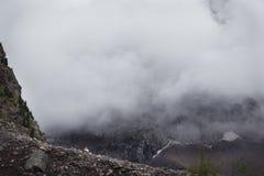 Туман покрывая леса горы Зеленые атмосферические горы стоковые изображения rf
