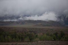 Туман покрывая леса горы Зеленые атмосферические горы стоковые фотографии rf
