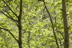 зеленые валы Стоковая Фотография