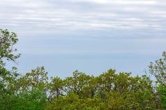 Зеленые ветви дерева на голубом небе заволакивают стоковое фото rf