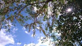 Зеленые ветви дерева против голубого неба/ Стоковая Фотография RF