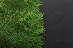 Зеленые ветви дерева туи на черной предпосылке стоковые фотографии rf