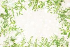 Зеленые ветви дерева туи с рамкой снега на бежевой деревенской предпосылке стоковые фото