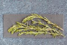 Зеленые ветви розмаринового масла Стоковые Фотографии RF