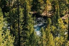 Зеленые ветви хвои на предпосылке озера горы Стоковое Изображение RF