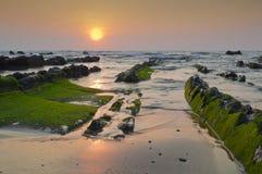 Зеленые водоросли в утесах, на заходе солнца в Barrika Стоковая Фотография