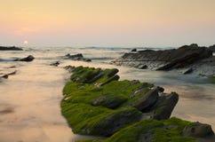 Зеленые водоросли в утесах, на заходе солнца в Barrika Стоковое фото RF