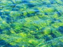 Зеленые водоросли под предпосылкой чистой воды Стоковое фото RF