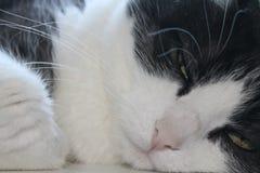 зеленые глаза кота закрывают вверх стоковое фото