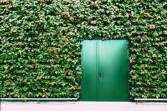 Зеленые двери и стена зеленого растения Изображение модель-макета Стоковая Фотография RF