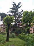 Зеленые деревья вокруг жилых домов в Риме стоковые изображения rf