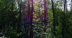 Зеленые деревья в лесе акции видеоматериалы