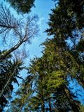 Зеленые деревья и голубое skie стоковые фото