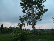 Зеленые деревья, поле риса, батт, облако, и небо Стоковое фото RF