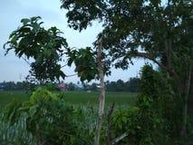 Зеленые деревья, поле риса, дома и небо Стоковая Фотография RF