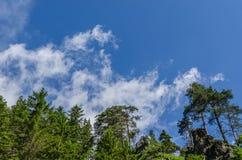 Зеленые деревья с небом стоковые изображения