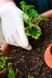 зеленые детеныши potting завода руки стоковое изображение rf