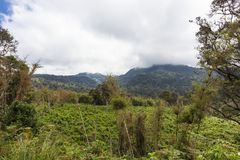 Зеленые джунгли в сердце Кении Aberdare, Африка Стоковое Изображение RF