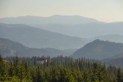 Зеленые ели на фоне прикарпатских гор в лете Украина Стоковые Фотографии RF