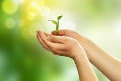 Зеленые заводы ростка в руках Стоковая Фотография