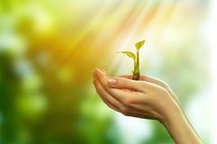 Зеленые заводы ростка Стоковое Изображение
