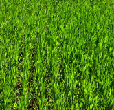 зеленые заводы Стоковые Фотографии RF