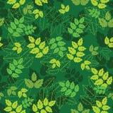 зеленые заводы Стоковое фото RF