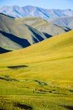Зеленые земли под горами с лошадями стоковое фото rf