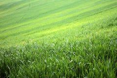 зеленые земли Стоковые Фото