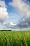 зеленые земли стоковая фотография