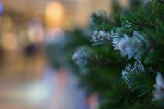 Зеленые иглы на спрусе, ели, сосне разветвляют Запачканная конспектом предпосылка праздника с Bokeh Селективный фокус Зима Стоковое Фото