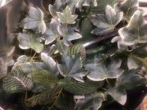 Зеленые искусственные листья стоковые фотографии rf