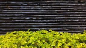 Зеленые и желтые листья на деревянной стене стоковое изображение rf